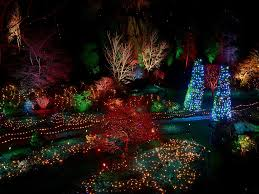 this is why you should visit botanical gardens in the winter