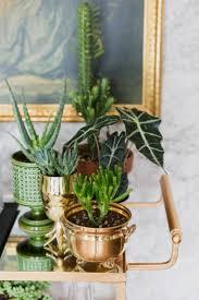 apartment balcony garden ideas best foliagehouse plants images on