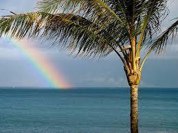 maui rainbow with palm tree a rainbow at napili bay if yo u2026 flickr