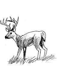 dessins à colorier coloriage chevreuil à imprimer