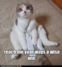 Meme O - teach me your ways o wise one cheezburger funny memes funny