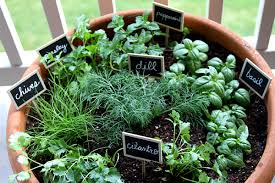 Potted Herb Garden Ideas Rate Herb Garden Pots Home The Pottery Post Terracotta