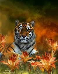 in nature series tigers in a field of flowers digital
