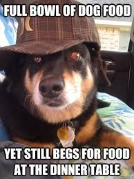 Dog Food Meme - full bowl of dog food yet still begs for food at the dinner table