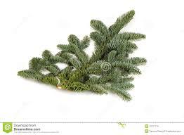 christmas twig tree tall twig tree christmas trees by tiny twig