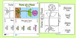 parts of a plant foldable interactive visual aid template arabic