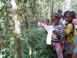 protecting active youth play madagascar lemur