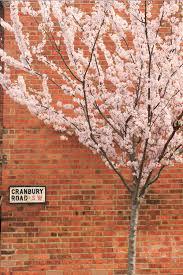 braided cherry trees custom ketubah ketubah arts