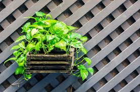 plants that don t need sunlight to grow 6 plants that can grow without sunlight