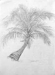palm tree joan berg victor drawing item 503300