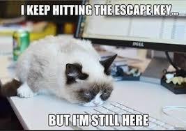 Office Work Memes - the 16 best office memes of 2016 glassdoor blog