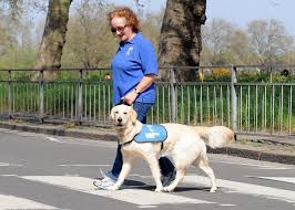 Sponsor A Puppy For The Blind Sponsor A Guide Dog Puppy Guide Dogs