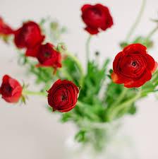 fresh cut flowers ranunculus fresh cut studio emme
