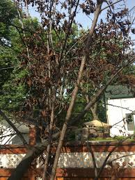 my tree seems to be dying but only on one side ask an expert
