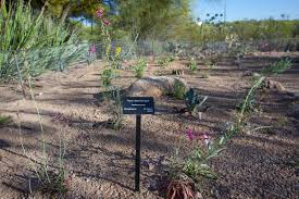 Garden State Rocks by Gardens Tohono Chul Tucson Az
