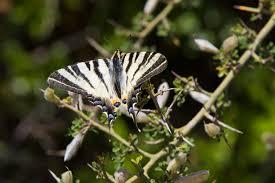 Gambar alam cabang bunga margasatwa serangga botani Flora