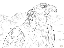golden eagle portrait coloring page free printable coloring pages