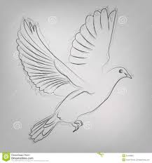 vector sketched dove stock photo image 35448880