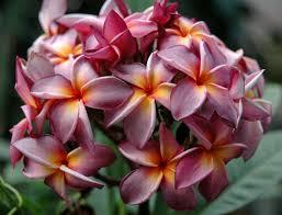 24 best tropical garden images on pinterest tropical garden