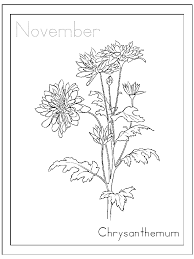 november coloring pages chrysanthemum flower coloringstar