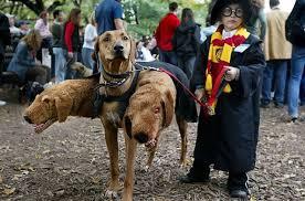 Crazy Halloween Costume Crazy Halloween Costumes Harry Potter 3 Headed Dog U2013 Motley