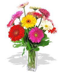 gerbera daisies gerbera arrangement baton la billy heroman s