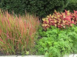 the grace of grasses state by state gardening web articles