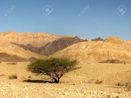 colored sand the arava desert different colored sand and stones eilat