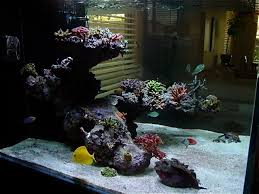 Reef Aquascape Designs 49 Best Nano Reef Aquascaping Images On Pinterest Reef Aquarium