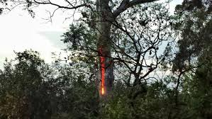 lightning struck this tree and now it s burning from the inside