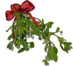 where to buy mistletoe paulino gardens boughs and evergreen bunches denver colorado