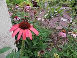 bonnie u0027s self seeded garden beds in pennsylvania fine gardening