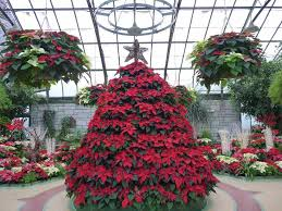christmas lights in niagara falls ontario things to do in niagara falls in winter attractions festivals 2018