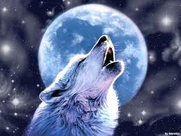 free howling wolf wallpapers wide wallpapers