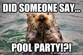 Pool Meme - did someone say pool party did someone say pool party