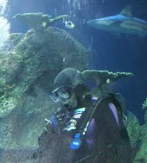 Colorado snorkeling images Where to go scuba diving and snorkeling in aquariums jpg