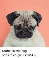 Sad Pug Meme - dramatic sad pug httpstcogwfg0lkngz meme on me me