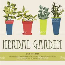 herbal garden herbal garden stock vector art more images of arugula 186964561