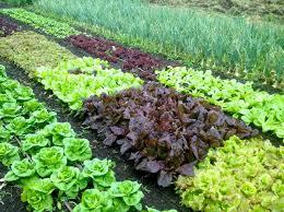 vegetable garden fencing ideas the healthnut foodie organic garden