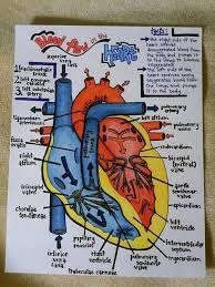 He Made Accurate Drawings Of The Human Anatomy Best 25 Diagram Of The Heart Ideas Only On Pinterest Heart