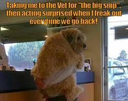 Dog At Vet Meme - vet phobia