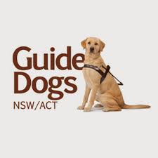 How Do Blind Dogs Know Where To Go Guide Dogs Nsw Act Youtube