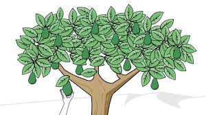 how to plant an avocado tree with pictures wikihow
