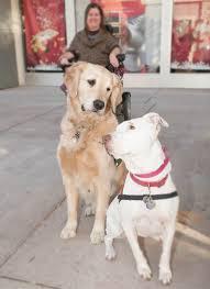 Canine Creature Comforts Creature Comforts David Magazine