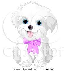 bichon frise dog pictures clipart cute bichon frise or maltese puppy dog wearing a pink bow