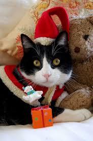 214 christmas kitty cats images christmas