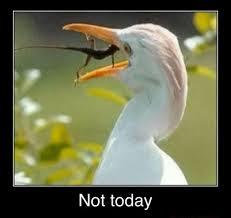 Lizard Meme - egret lizard not today meme funny joke pictures