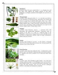 plant 7 638 jpg cb 1379279226