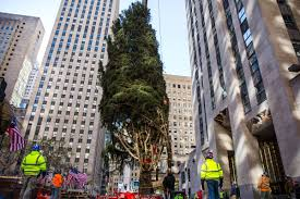 Rockefeller Tree 2017 Rockefeller Center Tree Has Arrived In Nyc Photos