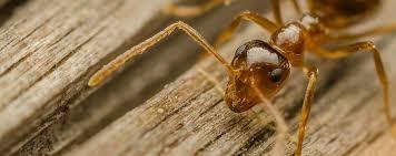 we get rid of pests portland exterminator